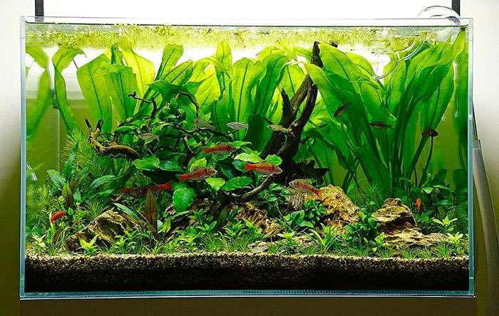 Các loại thủy sinh bể cá