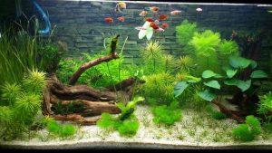 Cắt kính bể cá