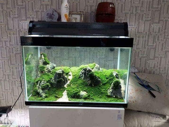 Bộ sưu tập hồ thủy sinh chơi rêu mini fiss