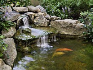 Làm thác nước cho hồ cá Koi đẹp, tự nhiên nhất