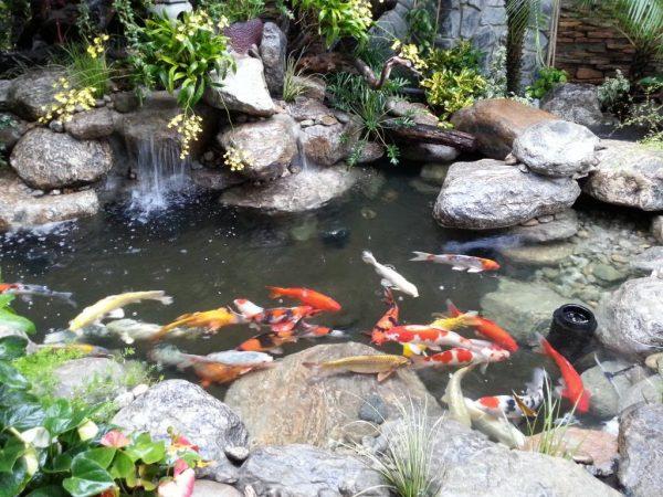 Cách làm thác nước hồ cá koi