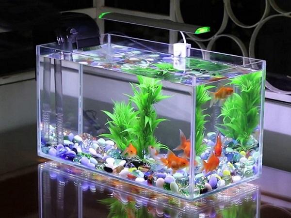 hồ cá mini