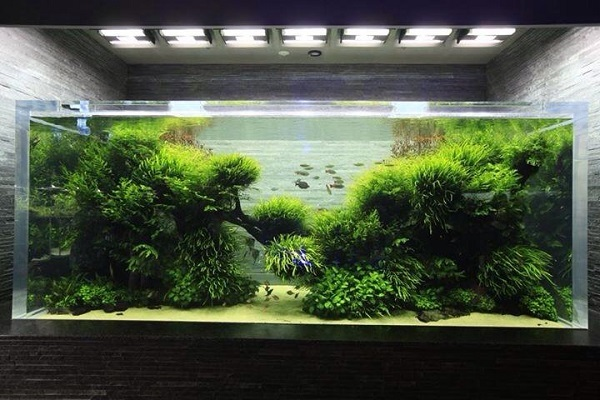 hồ cá thủy sinh
