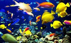 Cần cho cá cảnh biển ăn đúng cách